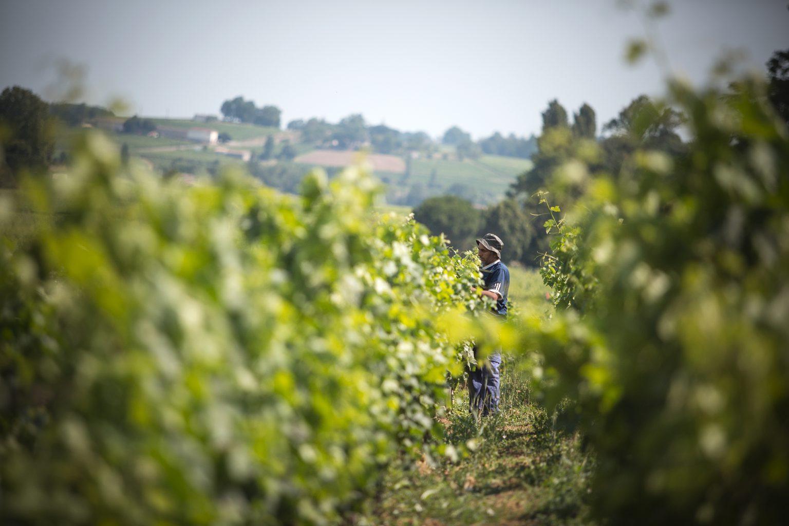 Un vin, une signature - Château Franc Mayne - Château Franc Mayne